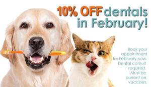 pets dental health month 300x174