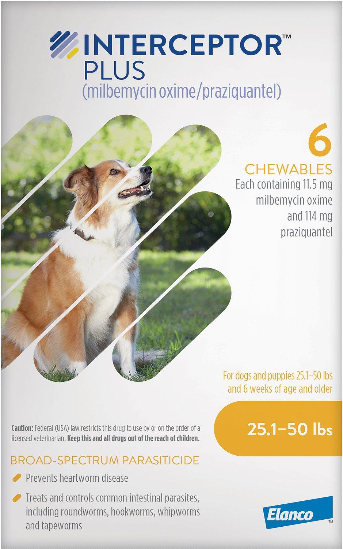 Seasonal Pet Care Tips